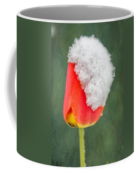 Gardening Coffee Mug featuring the photograph Snow Covered Tulip by Ludwig Riml