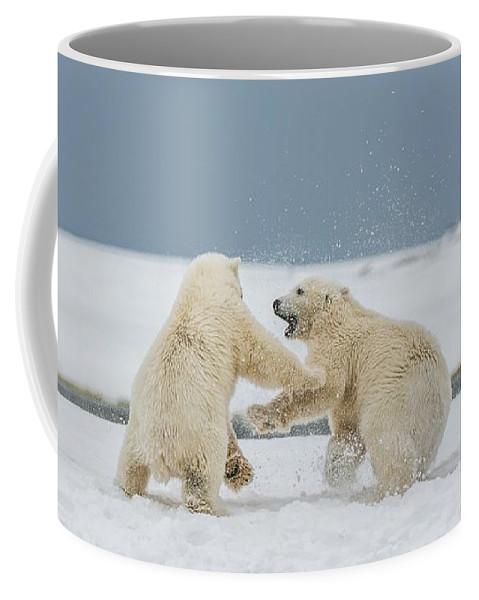 Bears Coffee Mug featuring the photograph Snow Fight by Scott Wickward