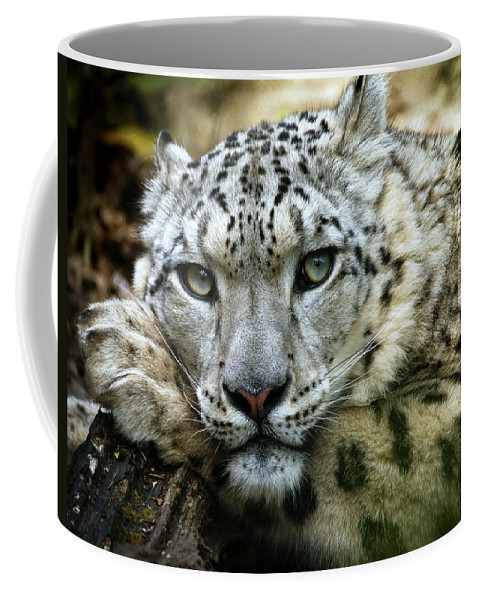 Animal Coffee Mug featuring the photograph Snow Leopard by Chris Boulton