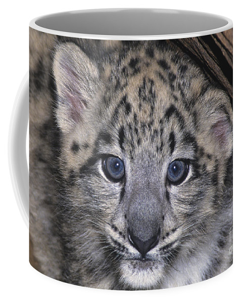 Asia Coffee Mug featuring the photograph Snow Leopard Cub Endangered by Dave Welling