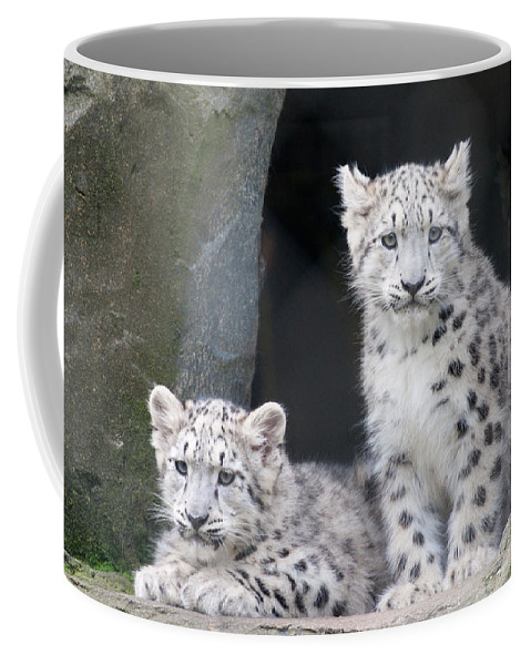 Animal Coffee Mug featuring the photograph Snow Leopard Cubs by Chris Boulton