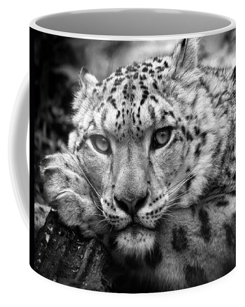Animal Coffee Mug featuring the photograph Snow Leopard In Black And White by Chris Boulton