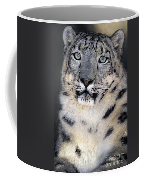 Snow Leopard Coffee Mug featuring the photograph Snow Leopard Portrait Endangered Species Wildlife Rescue by Dave Welling