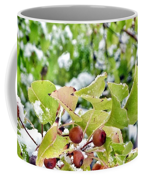 Snow Covered Green Leaves With Red Berries. Coffee Mug featuring the photograph Snow On Green Leaves With Red Berries by Susan Garren