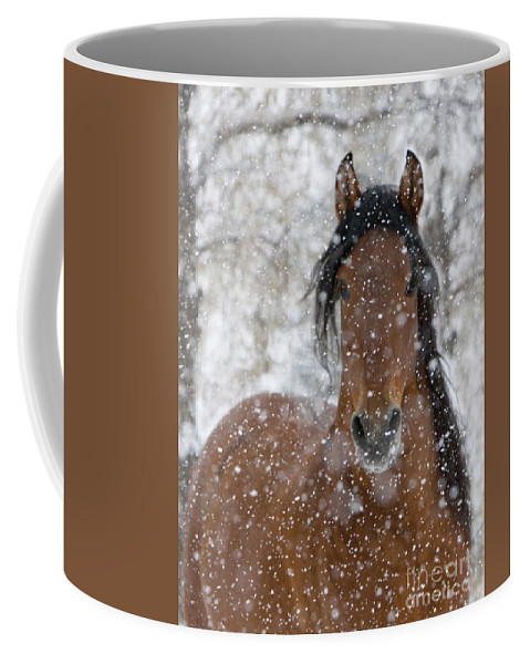 Horse Coffee Mug featuring the photograph Snow Stallion by Carol Walker