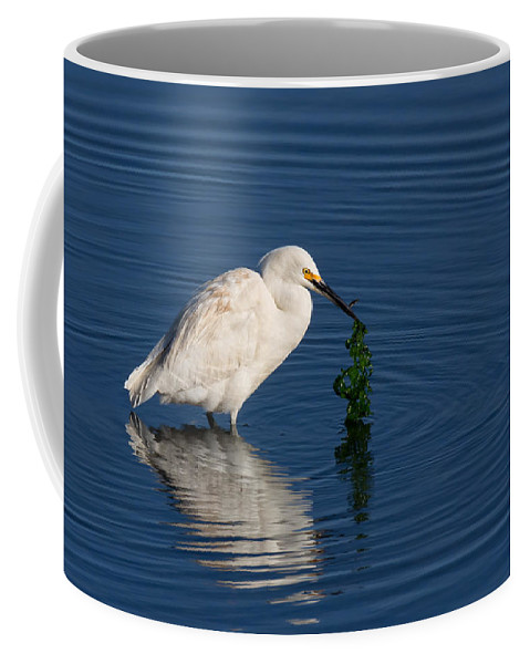 Snowy Egret Coffee Mug featuring the photograph Snowy Egret Catches Sushi And Seaweed by Kathleen Bishop
