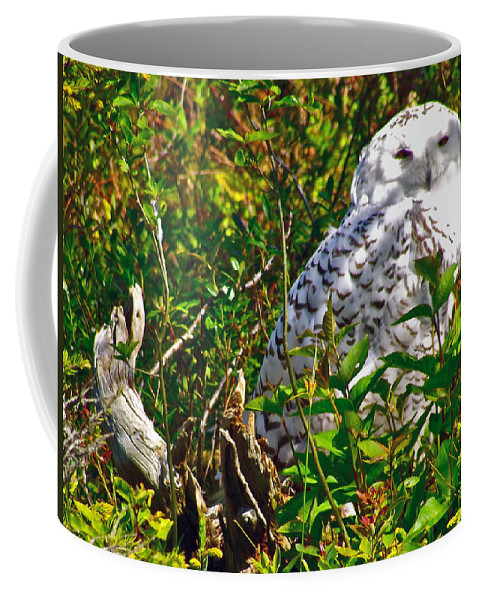 Snowy Owl In Salmonier Nature Park Coffee Mug featuring the photograph Snowy Owl In Salmonier Nature Park-nl by Ruth Hager
