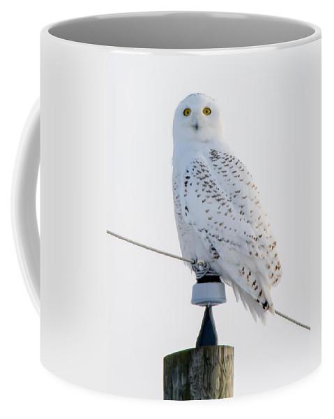 Bird Coffee Mug featuring the photograph Snowy Owl by Richard Kitchen