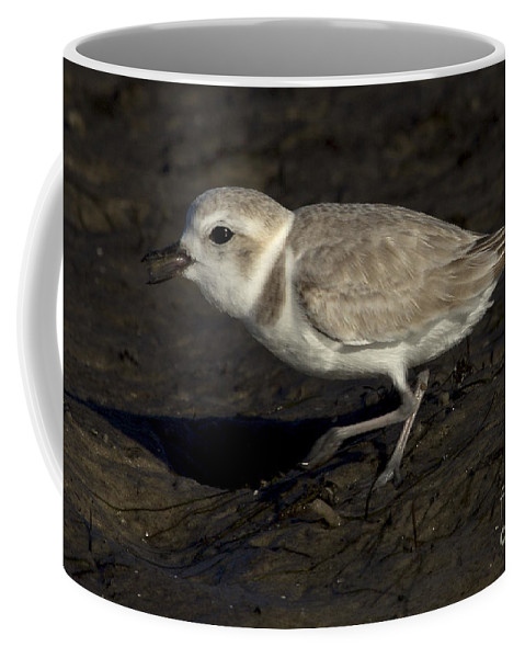 Snowy Plover Coffee Mug featuring the photograph Snowy Plover by Meg Rousher