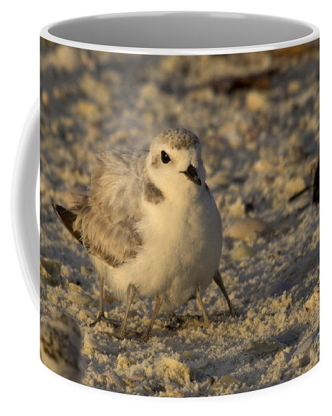 Snowy Plover Coffee Mug featuring the photograph Snowy Plover Transforms Into A Spiderbird 3 by Meg Rousher