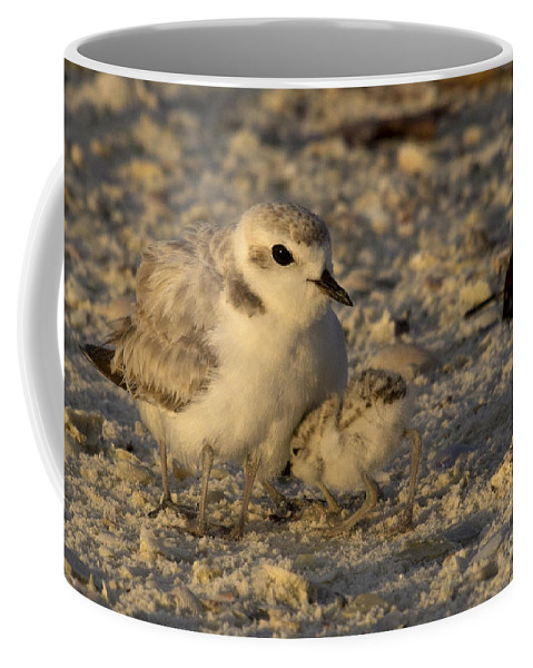 Snowy Plover Coffee Mug featuring the photograph Snowy Plover Transforms Into A Spiderbird 4 by Meg Rousher
