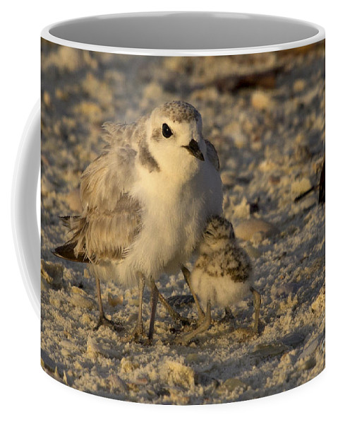 Snowy Plover Coffee Mug featuring the photograph Snowy Plover Transforms Into A Spiderbird 5 by Meg Rousher