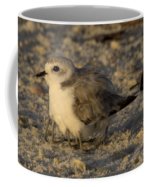 Snowy Plover Coffee Mug featuring the photograph Snowy Plover Transforms Into A Spiderbird 8 by Meg Rousher