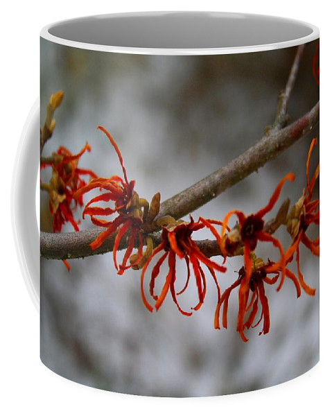 Witch Hazel Coffee Mug featuring the photograph Snowy Witch Hazel by Kathryn Meyer