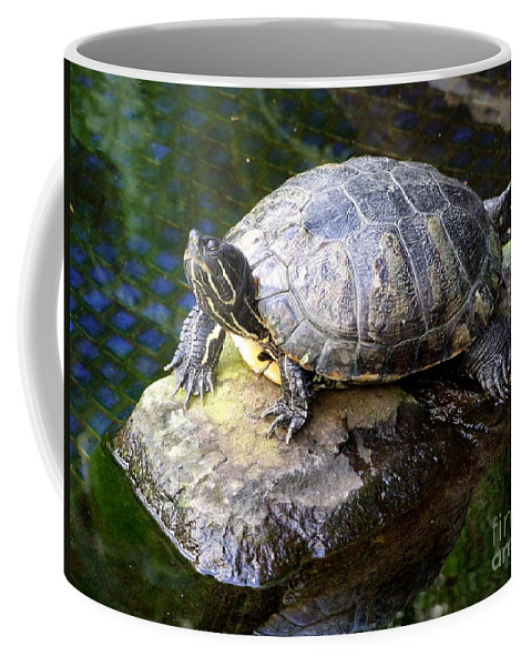 Turtle Coffee Mug featuring the photograph Soaking Up The Sun by Mary Deal