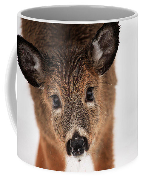 Deer Coffee Mug featuring the photograph Soaking Wet by Karol Livote