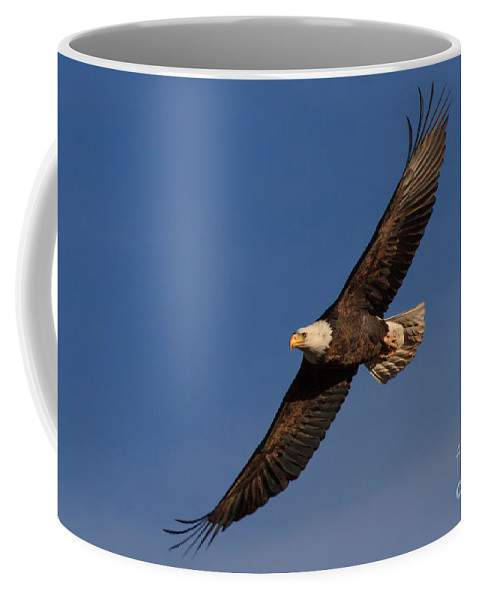 Bald Eagle Coffee Mug featuring the photograph Soaring Bald Eagle by Beth Sargent