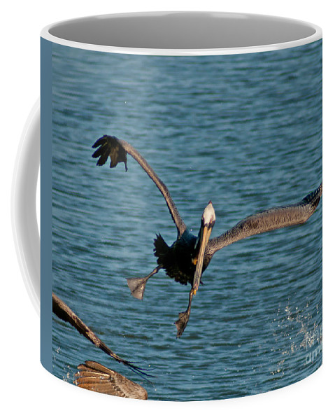 Pelican Coffee Mug featuring the photograph Soaring Pelican by Stephen Whalen