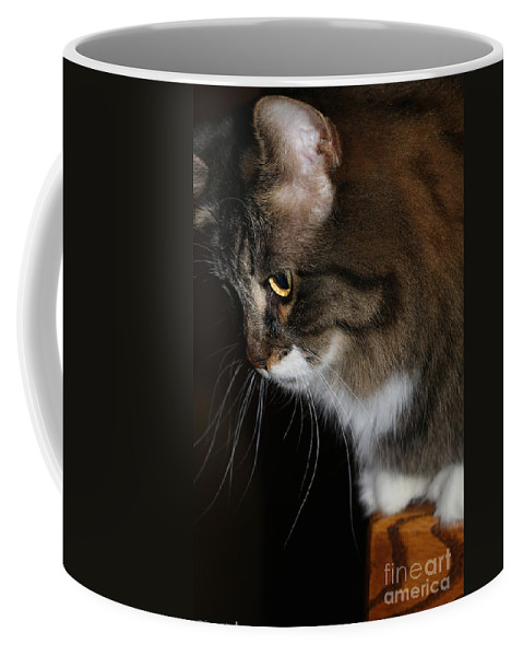 Animal Coffee Mug featuring the photograph Softie by Susan Herber