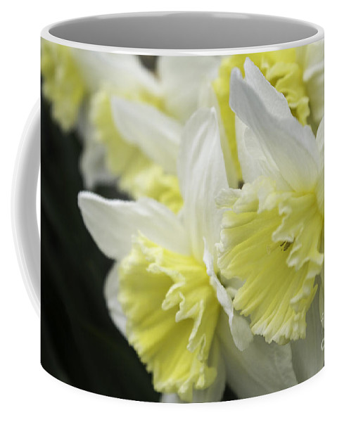 Daffodil Coffee Mug featuring the photograph Softly Spring by Arlene Carmel