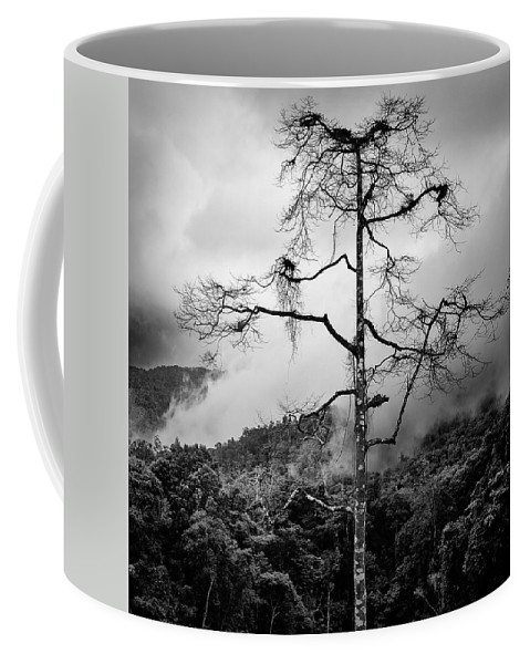 Cameron Highlands Coffee Mug featuring the photograph Solitary Tree by Dave Bowman