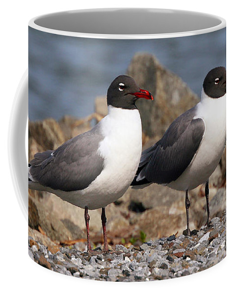 Seagulls Coffee Mug featuring the photograph Mr. And Mrs. Laughing Gull by Geoff Crego