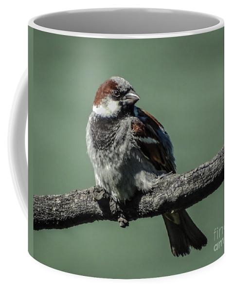 Sparrow Coffee Mug featuring the photograph Sparrow by Charlene Gauld