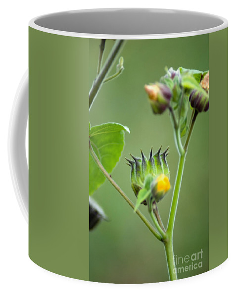 Green Flowers Coffee Mug featuring the photograph Spiky Green Wild Flowers by Optical Playground By MP Ray