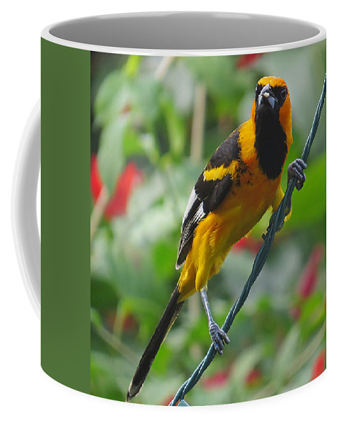 In Focus Coffee Mug featuring the photograph Spot Breasted Oriole by Dart and Suze Humeston