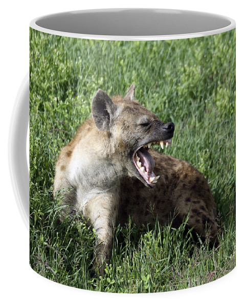 Aggression Coffee Mug featuring the photograph Spotted Hyena Crocuta Crocuta by Gilad Flesch
