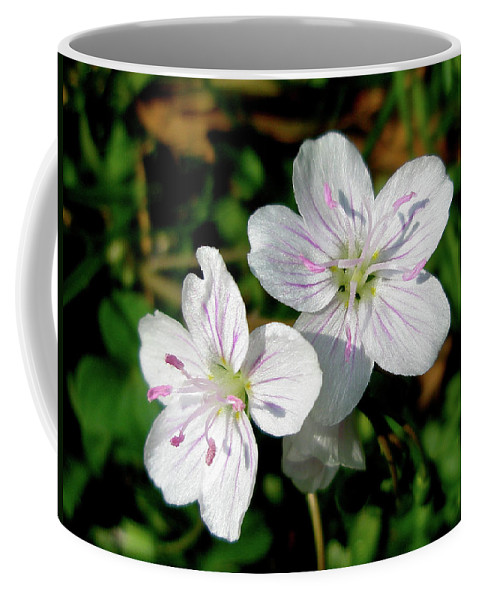Wildflower Coffee Mug featuring the photograph Spring Beauty Wildflowers - Claytonia Virginica by Mother Nature