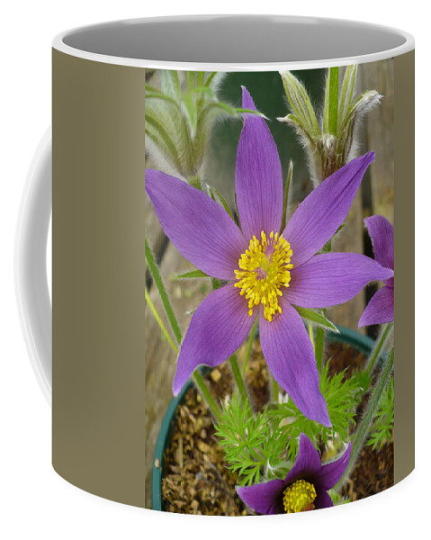 Coffee Mug featuring the photograph Spring Blooms Of 2013 B by Nicki Bennett