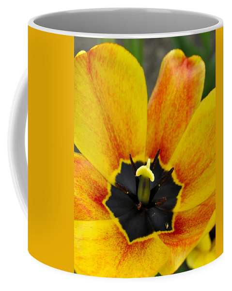 Tulips Coffee Mug featuring the digital art Spring Blossom Sbp by Jim Brage