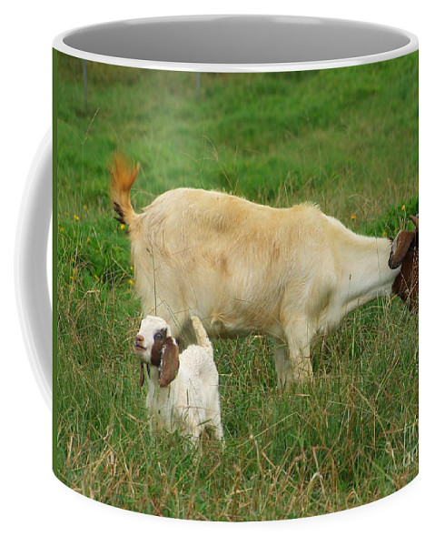White Coffee Mug featuring the photograph Spring Born by Mary Deal