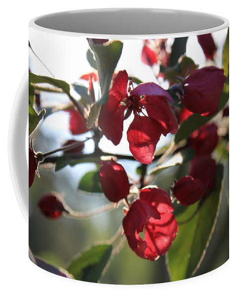 Spring Blossom Coffee Mug featuring the photograph Spring Crabapple Blossom by Hanne Lore Koehler