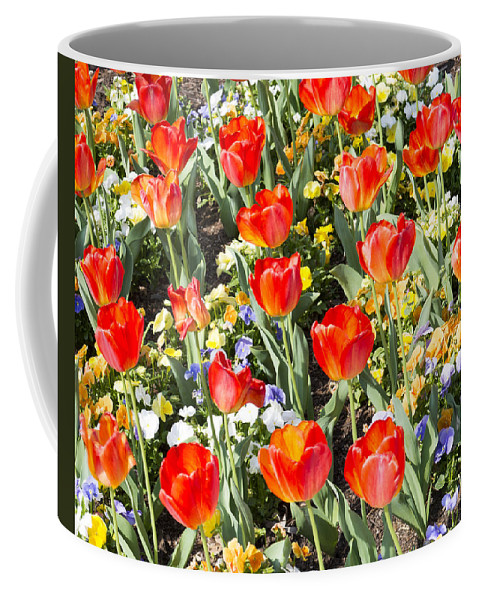 Spring Flowers Coffee Mug featuring the photograph Spring Flowers No. 1 by Greg Hager