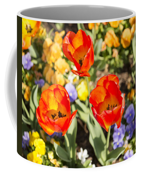 Spring Flowers Coffee Mug featuring the photograph Spring Flowers No. 3 by Greg Hager