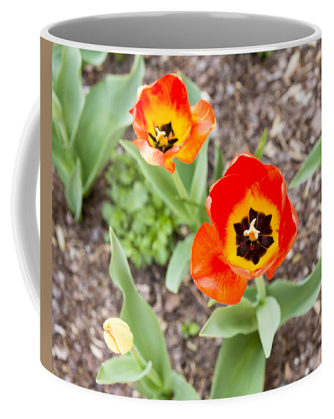 Spring Flowers Coffee Mug featuring the photograph Spring Flowers No. 7 by Greg Hager