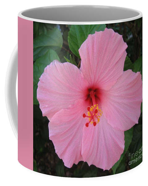 Pink Flower Coffee Mug featuring the photograph Spring by Graciela Castro