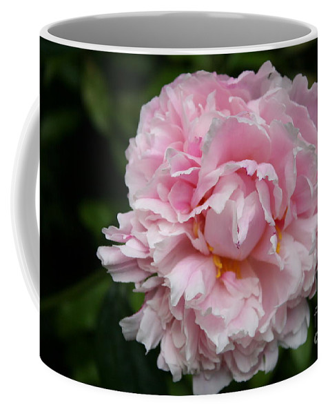 Peony Coffee Mug featuring the photograph Spring In Pink by Christiane Schulze Art And Photography