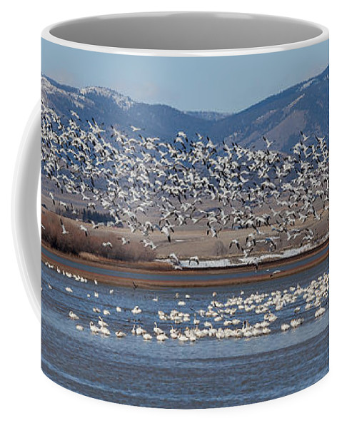 Snow Goose Coffee Mug featuring the photograph Spring Migration by Fran Riley