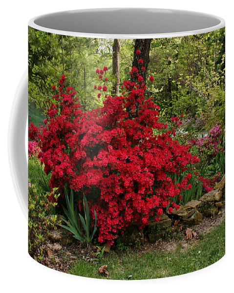 Azalea Coffee Mug featuring the photograph Spring Time by Sandy Keeton