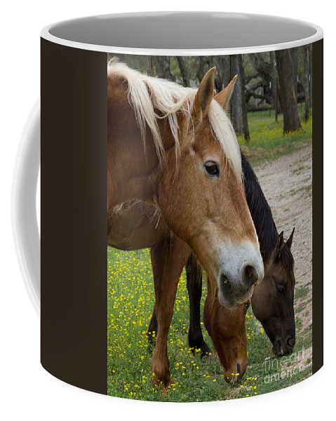 Horse Coffee Mug featuring the photograph Spring Treats by TN Fairey