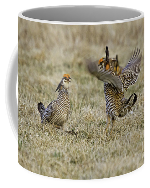 Airie Chicken Coffee Mug featuring the photograph Squabble by Jan Killian