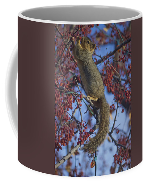 Squirrel Coffee Mug featuring the photograph Squirrel by Becca Buecher