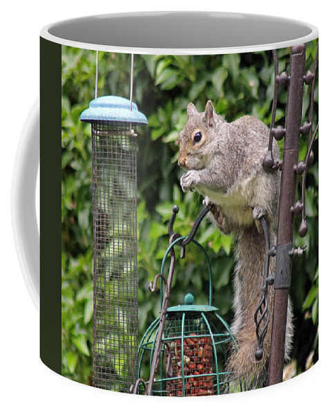 Grey Squirrel Coffee Mug featuring the photograph Squirrel Eating Nuts by Tony Murtagh