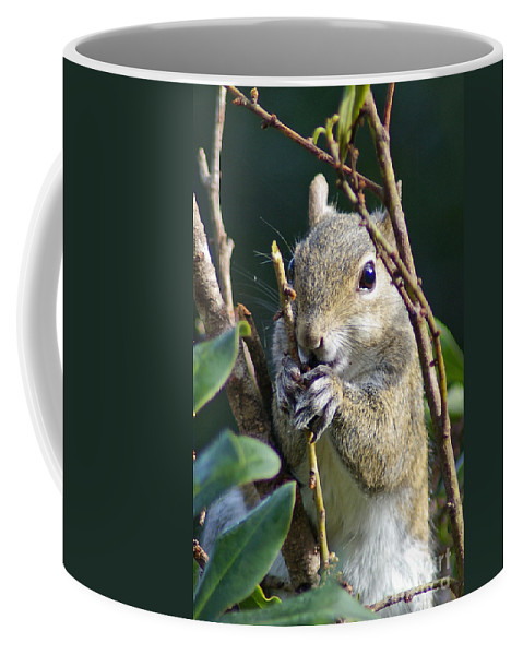 Squirrel Coffee Mug featuring the photograph Squirrel by Nancy L Marshall