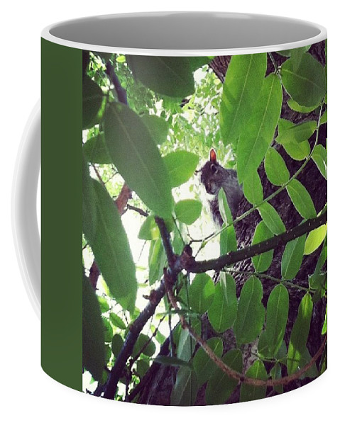 Squirrell Coffee Mug featuring the photograph Squirrell by Katie Cupcakes