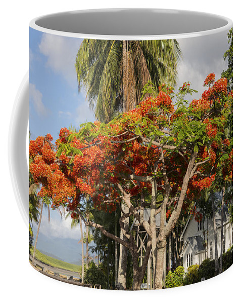 Port Douglass Australia Saint Mary's By The Sea St. Mary Church Churches Architecture Structure Structures Building Buildings Palm Tree Palms Trees Australian Poinciana Bloom Blooms Flower Flowers Poincianas Place Places Of Worship Landscape Landscapes Coffee Mug featuring the photograph St. Mary's By The Sea by Bob Phillips