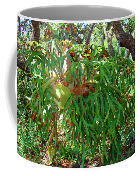 Staghorn Coffee Mug featuring the photograph Staghorn Fern by Nancy L Marshall